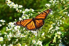 butterflyenh2019