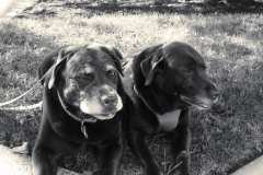 dogs2inbw2