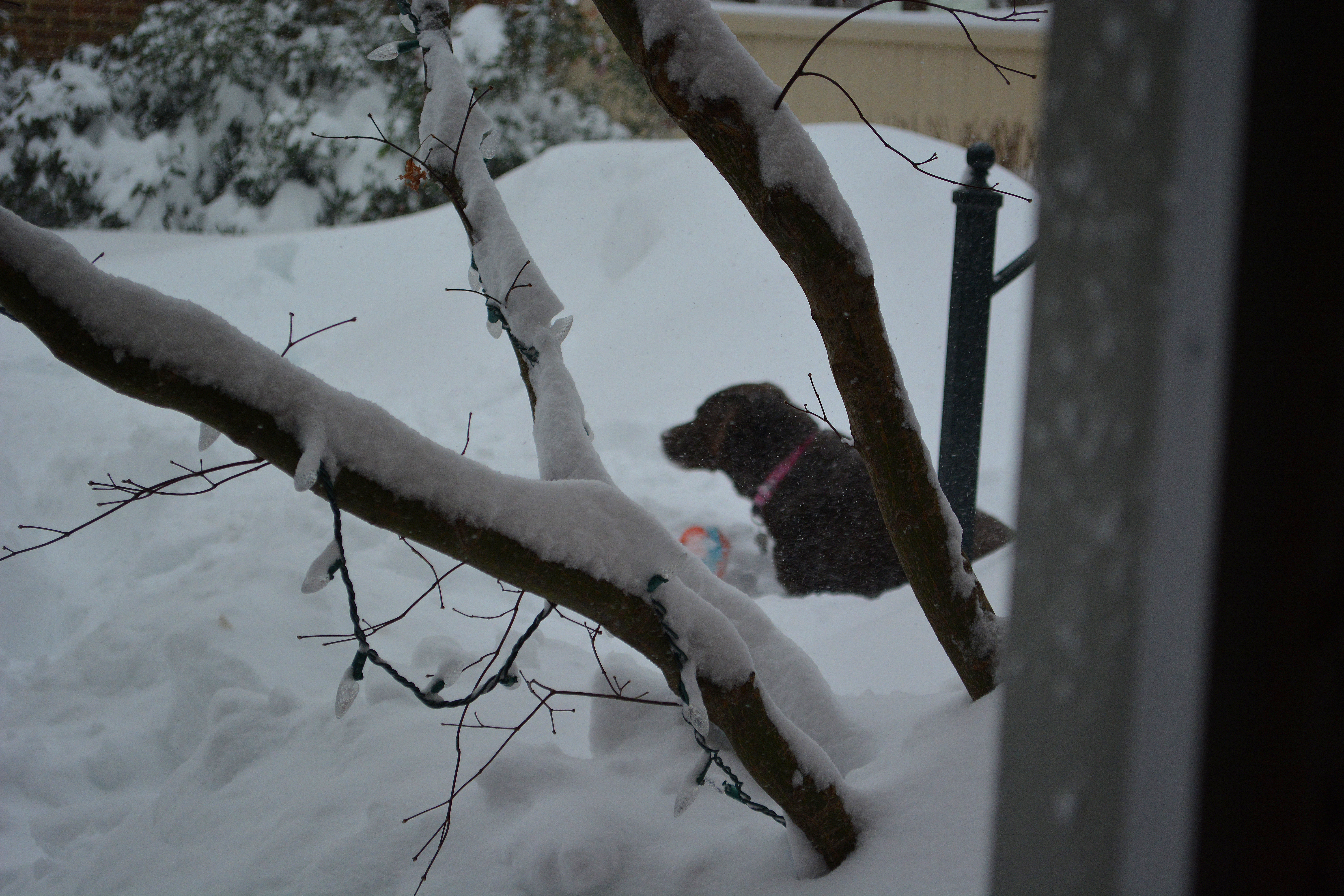 dogsinsnow2016enhance2