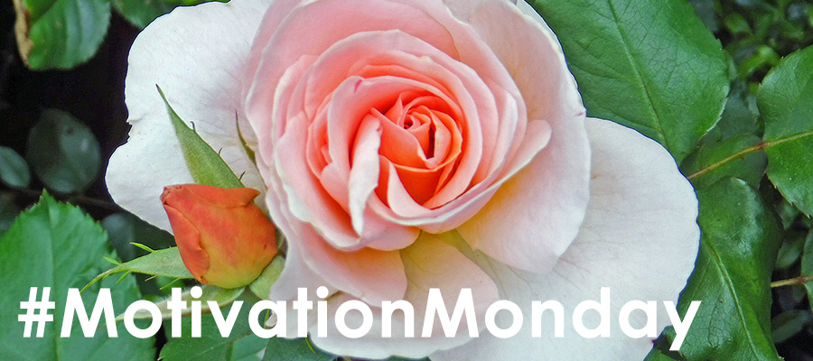 Blush pink rose with rosebud with quote - Do not discount those everyday joys! by Karl Robb #MotivationMonday