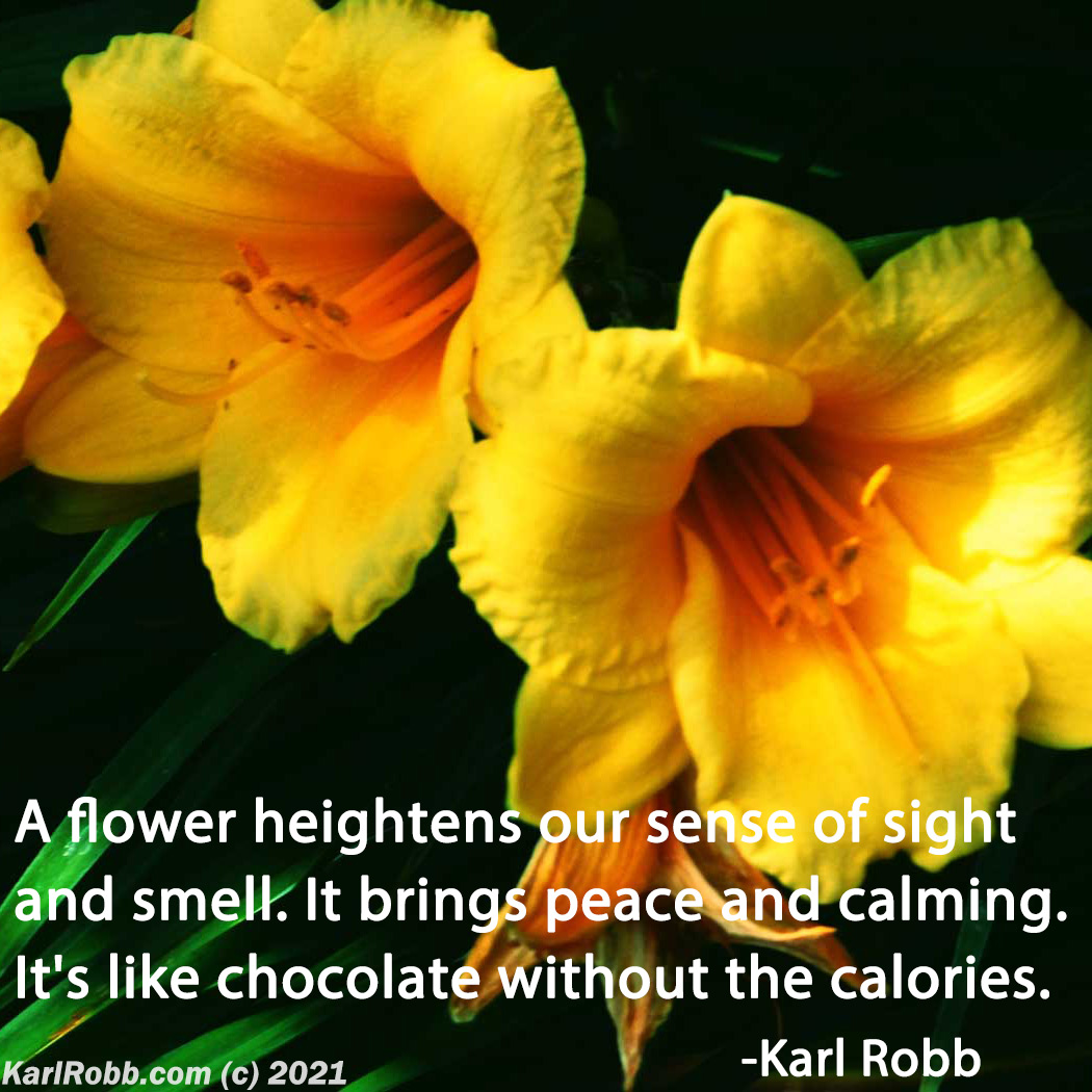 A flower heightens our sense of sight and smell. It brings peace and calming. It's like chocolate without the calories. #MotivationMonday by Karl Robb