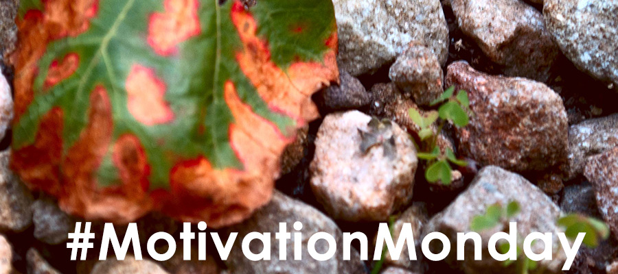 Picture of leaf lying on small multi-colored gravel with quote Keep inspired! Amazing events are happening all around us - all the time. See the morning sunrise. Watch the night sky. Observe! by Karl Robb #MotivationMonday